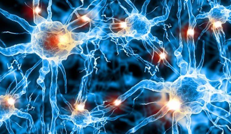 neurotransmission-breakthrough-neurosciencenews