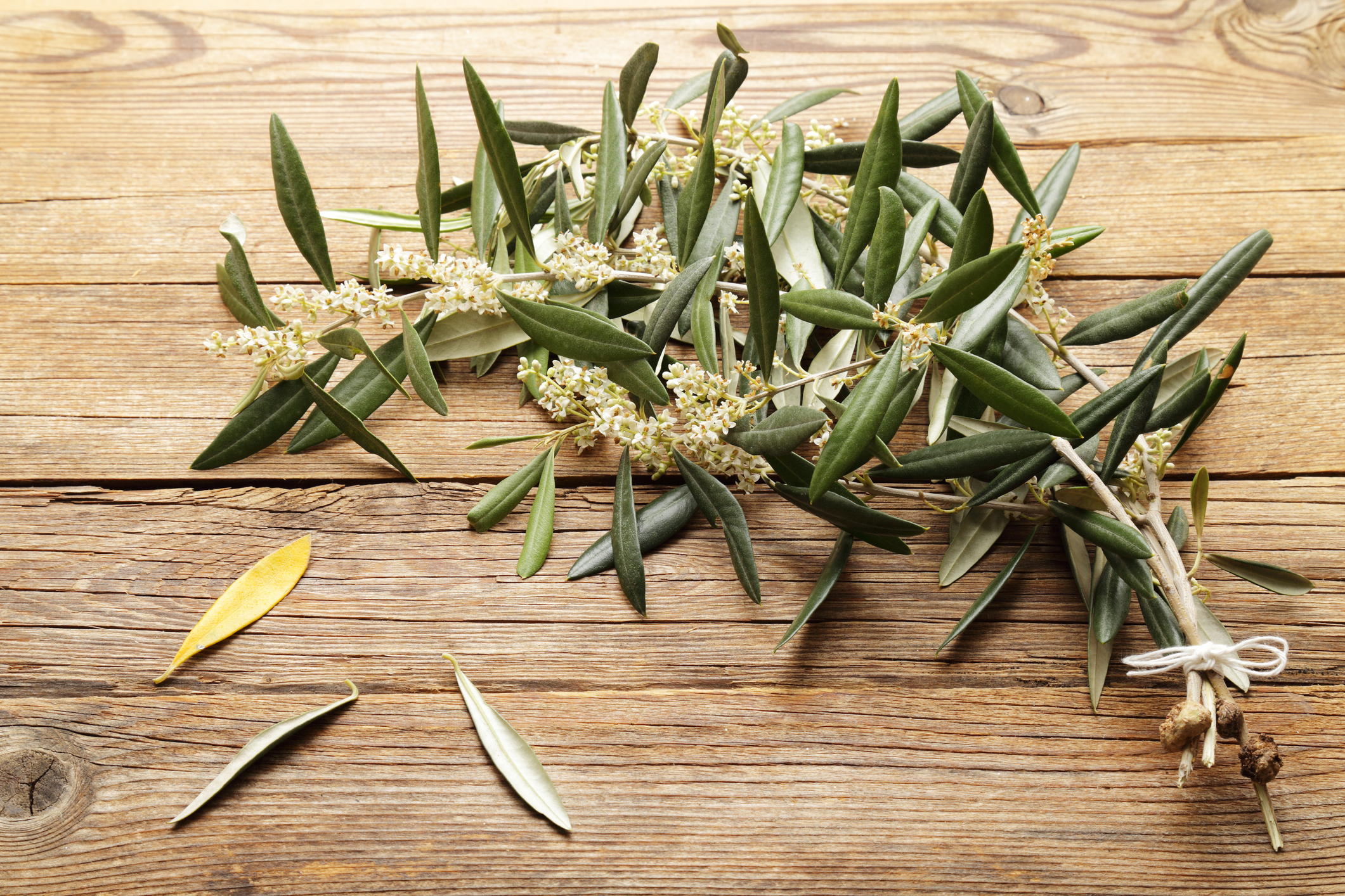 10 Herbs for Lung Support